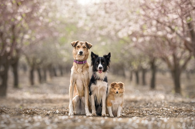 צלמות מקצועיות יצלמו את כלביכם באירוע התרמה לכלבים בעמותות