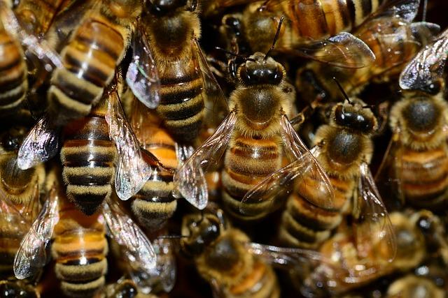 תיעוד: דבורים התפזרו בכביש ליד כפר בלום