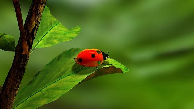 ירידה במספר החרקים בעולם - והקשר למזון שלנו