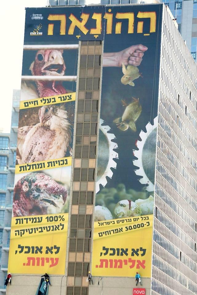 ההונאה נחשפת: החל הקמפיין נגד תעשיות הביצים והעוף בישראל