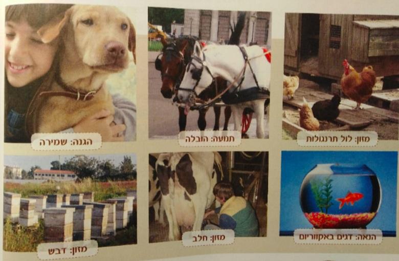 בעלי חיים מוצגים כפונקציה לשירות האדם