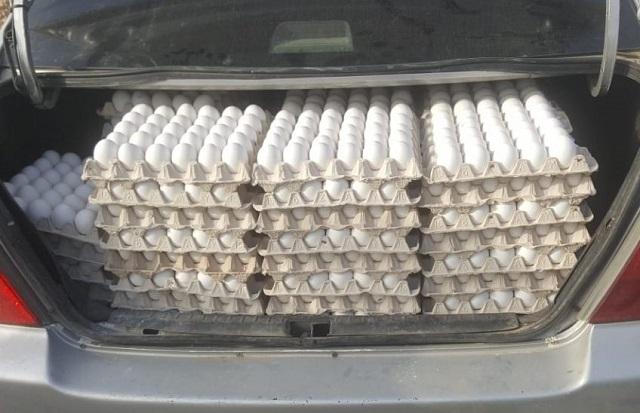 צעיר נתפס עם יותר מ-4000 ביצים החשודות כמוברחות