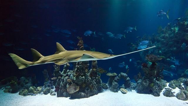 שיעור החמצן באוקיינוסים יורד ומסכן את בעלי החיים בו