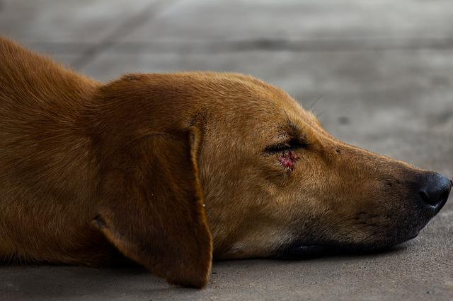 כתב אישום נגד גבר שהיכה כלב עם קרש