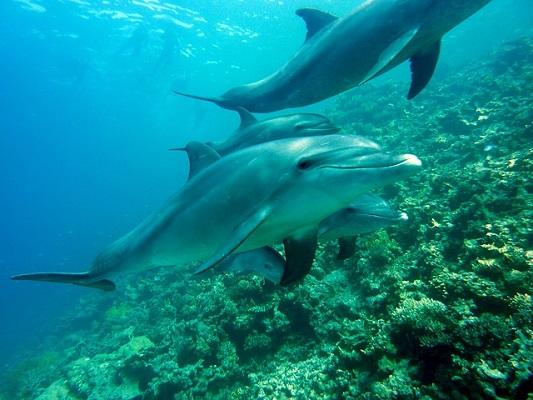 קרוב לאלף פגרי דולפינים נסחפו לחופי צרפת מאז דצמבר