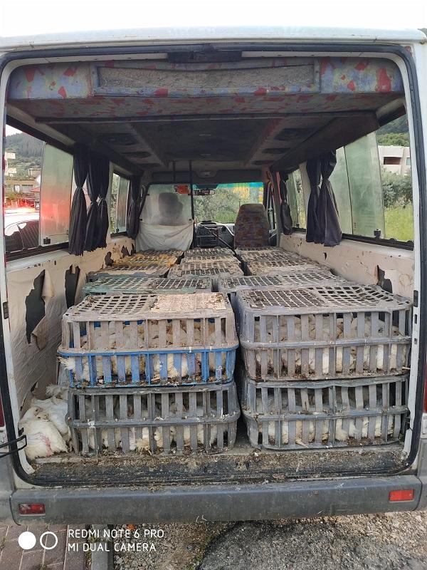 שוטרים עצרו חשוד שהוביל תרנגולות ברכב מסחרי ללא אישורים
