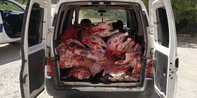נתפס חשוד שהוביל ברכבו כחצי טון בשר