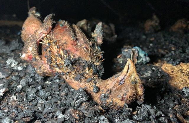 כ-60,000 תרנגולים נספו בשריפה במשק ביישוב דבורה