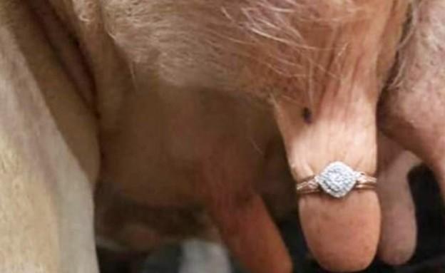הצעת נישואין מקורית: גרסת הרפתן