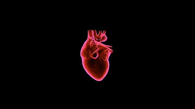 תזונה על בסיס צמחי מקטינה את הסיכון למות ממחלות לב ב-32% - מחקר חדש