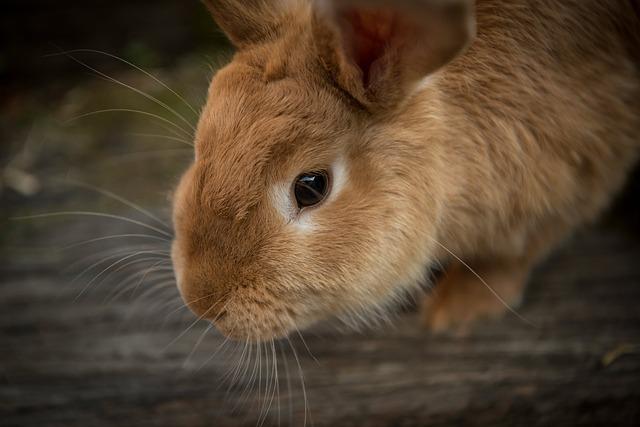 ארצות הברית: הסוכנות להגנת הסביבה תפסיק לערוך ניסויים על יונקים
