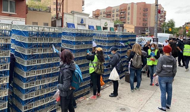 ברוקלין: הפגנות נגד מנהג תרנגול כפרות