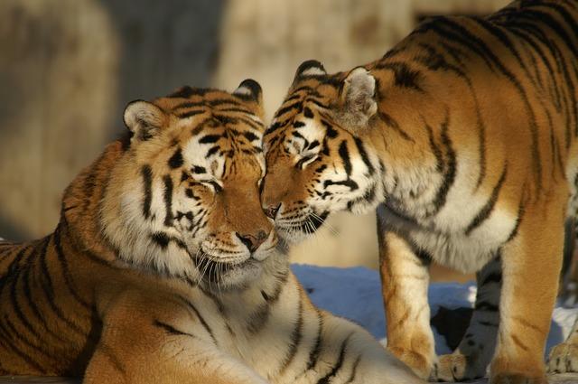 קליפורניה אסרה על מכירת פרווה ועל ניצול בעלי חיים בקרקסים