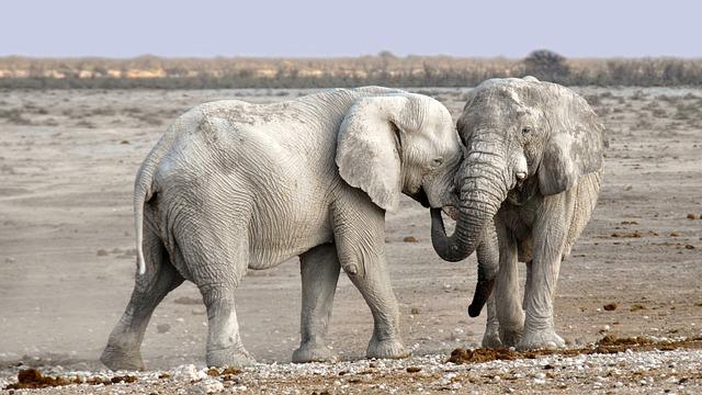 ממשלת דנמרק שחררה ארבעה פילים וגמל מקרקס