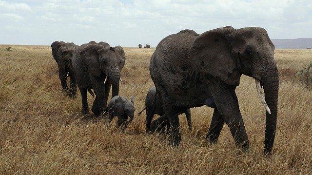 זימבבואה: יותר ממאתיים פילים מתו עקב בצורת