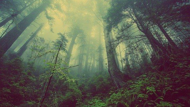 כנס אינטרנטי לתודעה אקלימית והצלת הסביבה