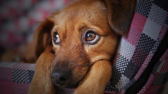 מאסר של שנה וחצי לגבר שהתעלל בשלושה כלבים והוביל למותם