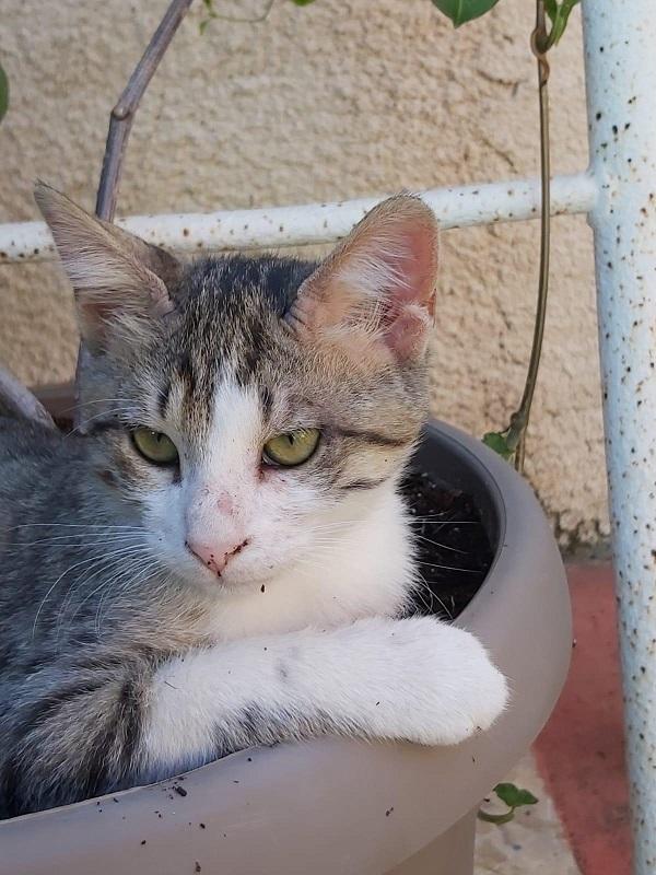 הפנינג אימוץ חתולים ביום שישי הבא בדיזנגוף סנטר