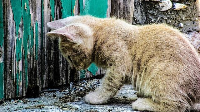 בת 70 נדרשת לשלם קנסות בסך 12,000 שקל על האכלת חתולים