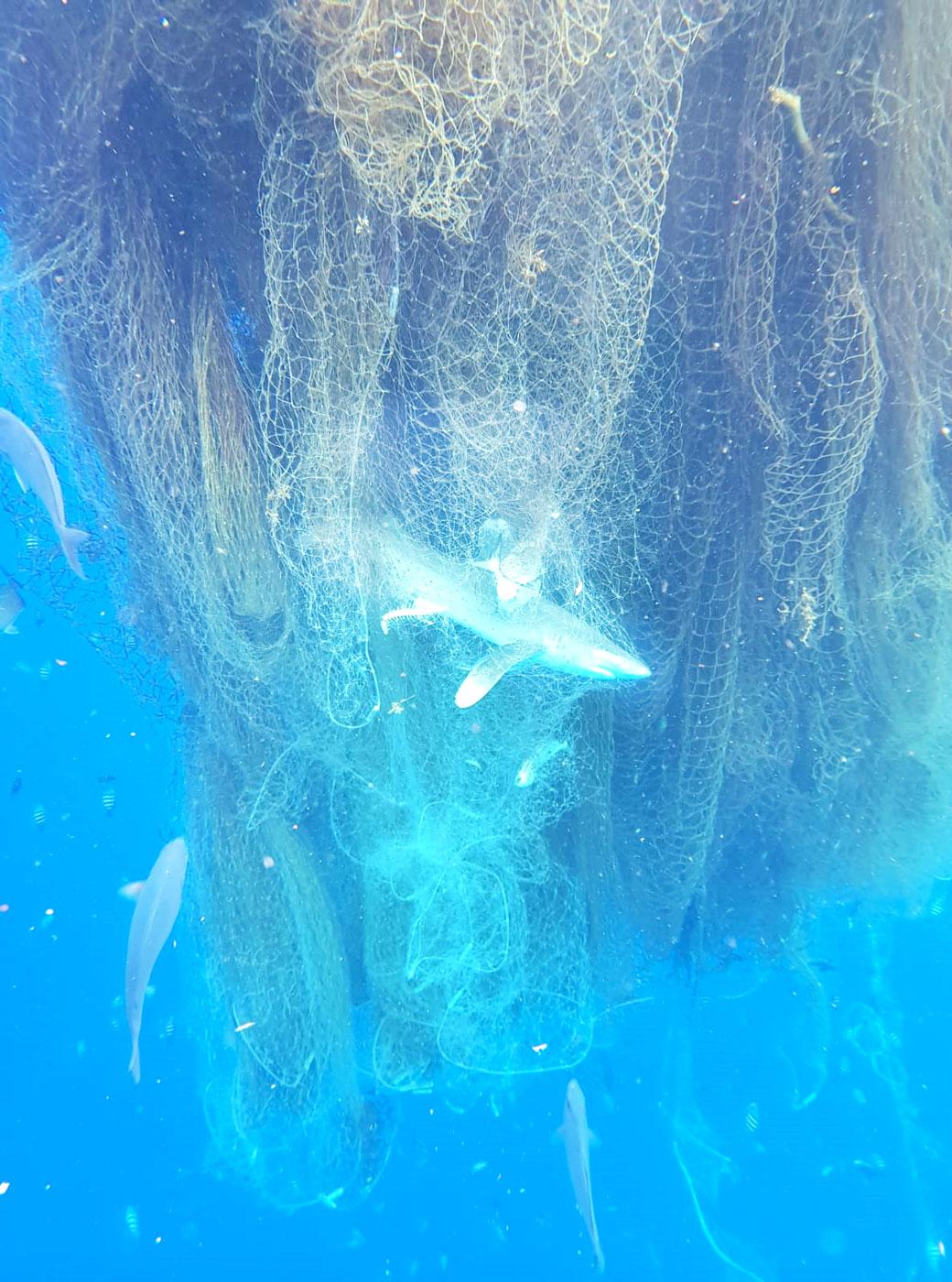 כריש ודגים נוספים כלואים ברשת דייגים