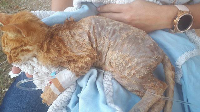 איש הקבע החשוד בגרימת מותה של גורת חתולים הושעה מתפקידו