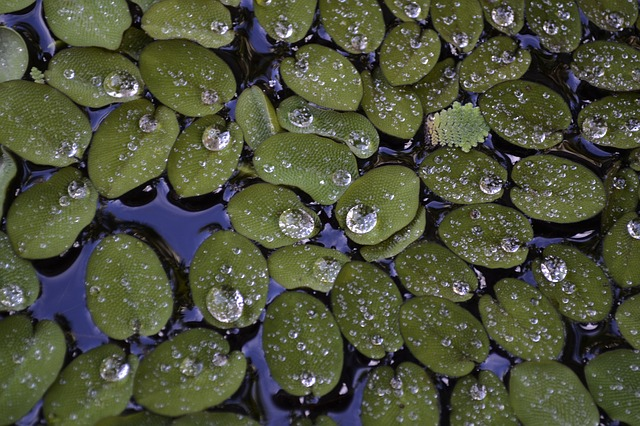 מדענים גילו ויטמין B12 בתוך עדשת מים