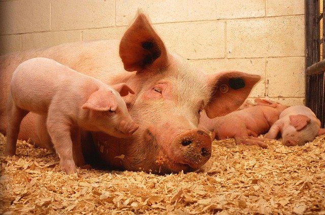 בריטניה 2019: ירידה של 185 מיליון לישט במכירות בשר בקר ובשר חזיר