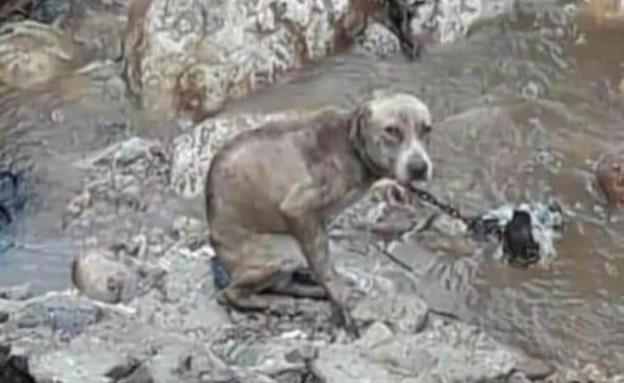 יאיר נתניהו: אין שום הבדל בין כלב לפרה, חזיר, תרנגולת או עז