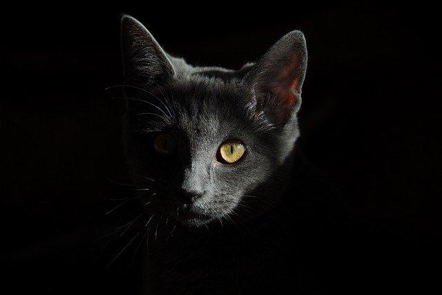 תיעוד: גבר בועט בחתולה בחוזקה