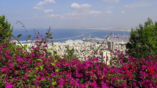 דרוש: אקולוג עירוני לעיריית חיפה - שישפיע על גורלם של חזירי הבר