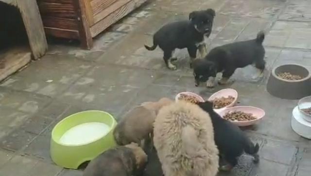 סין: אלפי חיות מחמד שננטשו באזורים מוכי נגיף הקורונה עלולים למות מרעב