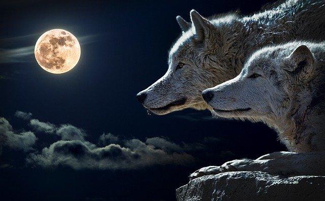 בעלי חיים מעבירים את פעילותם מהיום ללילה כדי להתחמק מבני אדם