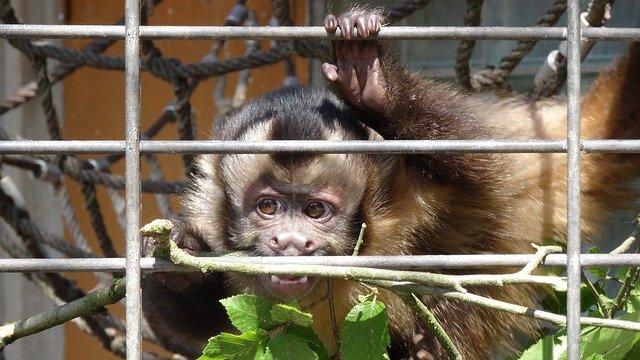 סין אוסרת על צריכת חיות בר ופועלת בחומרה נגד הסחר בהם