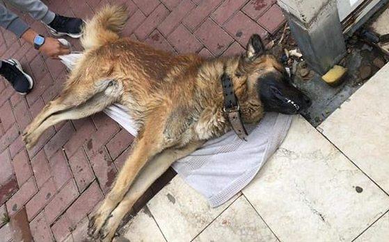 אשקלון: הרעלה זדונית ואכזרית של כלבים