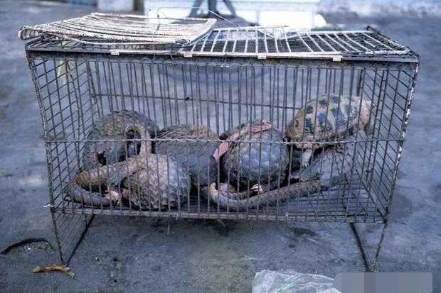 עצומה: לאסור על סחר וצריכה של חיות בר בעולם כולו