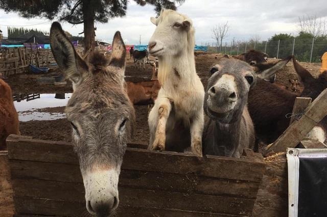 החווה של יוסי ממשיכה להתקיים - וזקוקה לעזרתכם