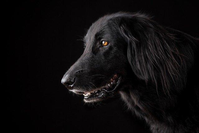 תיקון פקודת הכלבת: אושרה הצעת חוק של שרן השכל