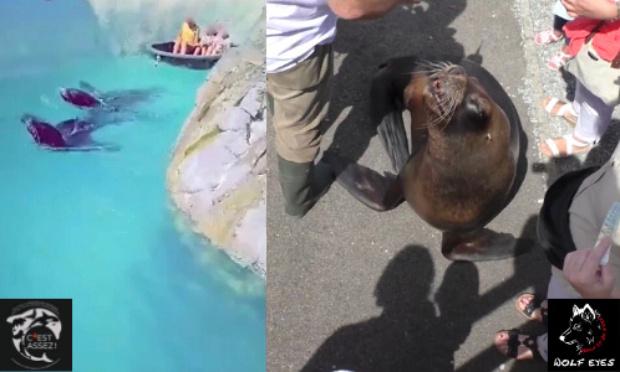 אריות ים משיטים ילדים בפארק מים - תיעוד