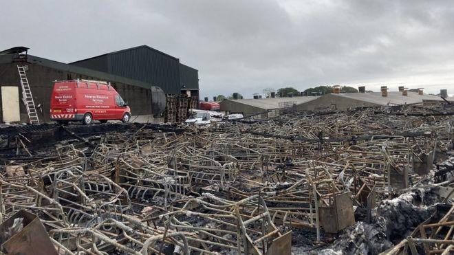 חוות הרבעת חזירים מהגדולים באירופה עלתה באש