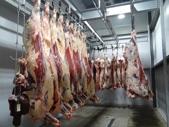 מקרי covid-19 בבתי מטבחיים עלולים להיות פי 30 מהמדווח