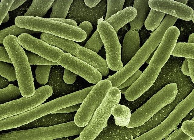 חיידקים ברמות גבוהות נמצאו בבשר בארצות הברית