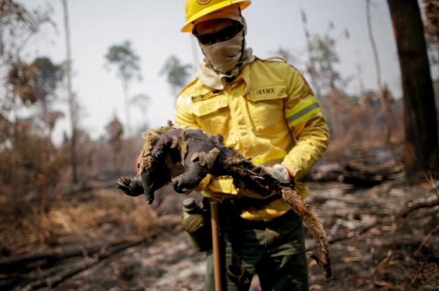 בירוא יערות האמזונס עלול לגרום למגפות חדשות