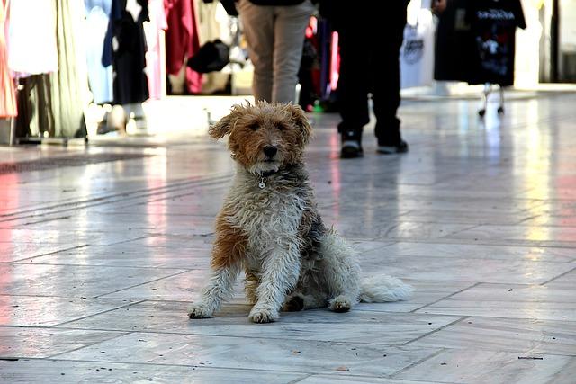 דובאי: כלבים וחתולים הומתו בשביל תערוכה
