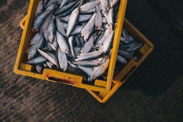 זיהום הזפת: נאסר שיווק דגים שנדוגו בים התיכון