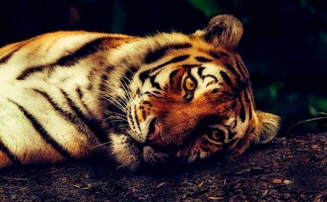 כמעט 4,000 חיות בר מסוכנות מוחזקות כחיות מחמד בבריטניה