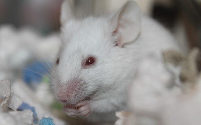 סין מפסיקה לחייב ניסויים בבעלי חיים על מוצרי קוסמטיקה מיובאים כלליים