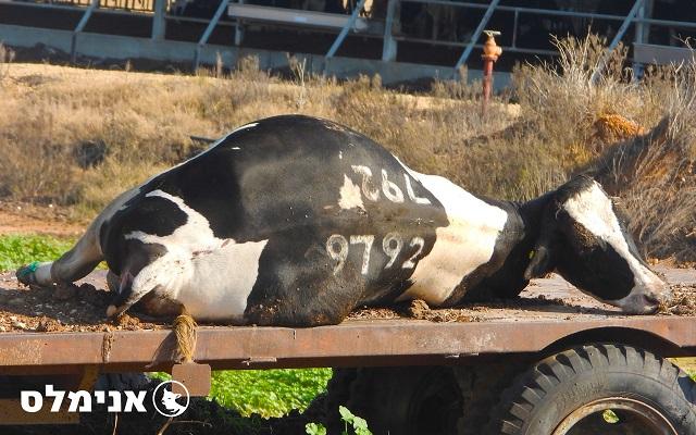 קבלן פינוי פגרים ופסדים הזרים דם לשטח חקלאי ולערוץ נחל