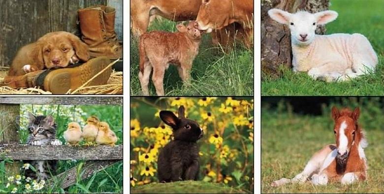 צעדה: דורשים עצמאות לבעלי החיים
