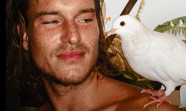 ציפור בר הולכת אחרי אדם שהציל אותה ברחבי ספרד