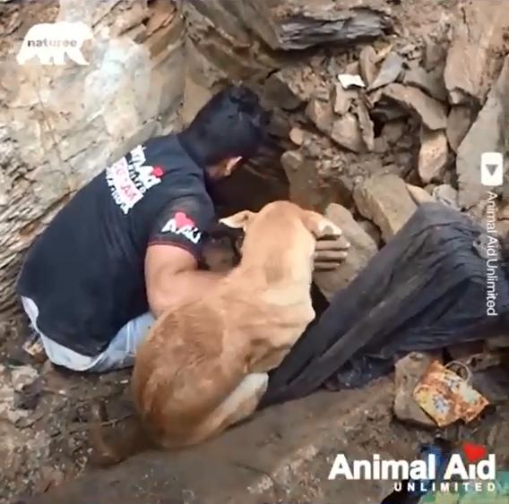 תיעוד: גורי כלבים מחולצים מהריסות בית
